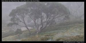 Dead Horse Gap track (Thredbo)