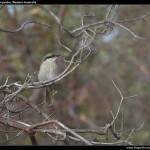 Birdlife at Wilson Inlet