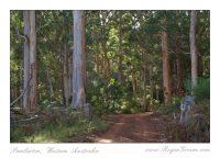 Hawke Brook Karri Forest
