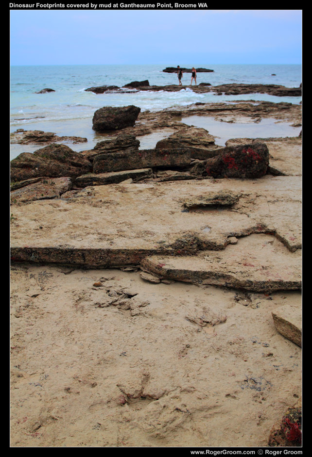 Broome Hovercraft Dinosaur Footprint