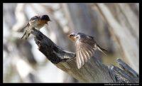 Photograph of Birds at Esperance Lakes