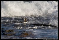 Photograph of South Coast Birds