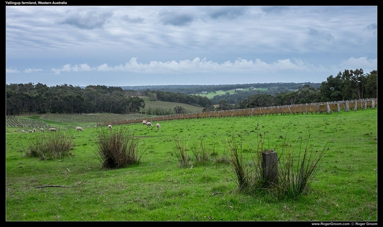Yallingup Farmland