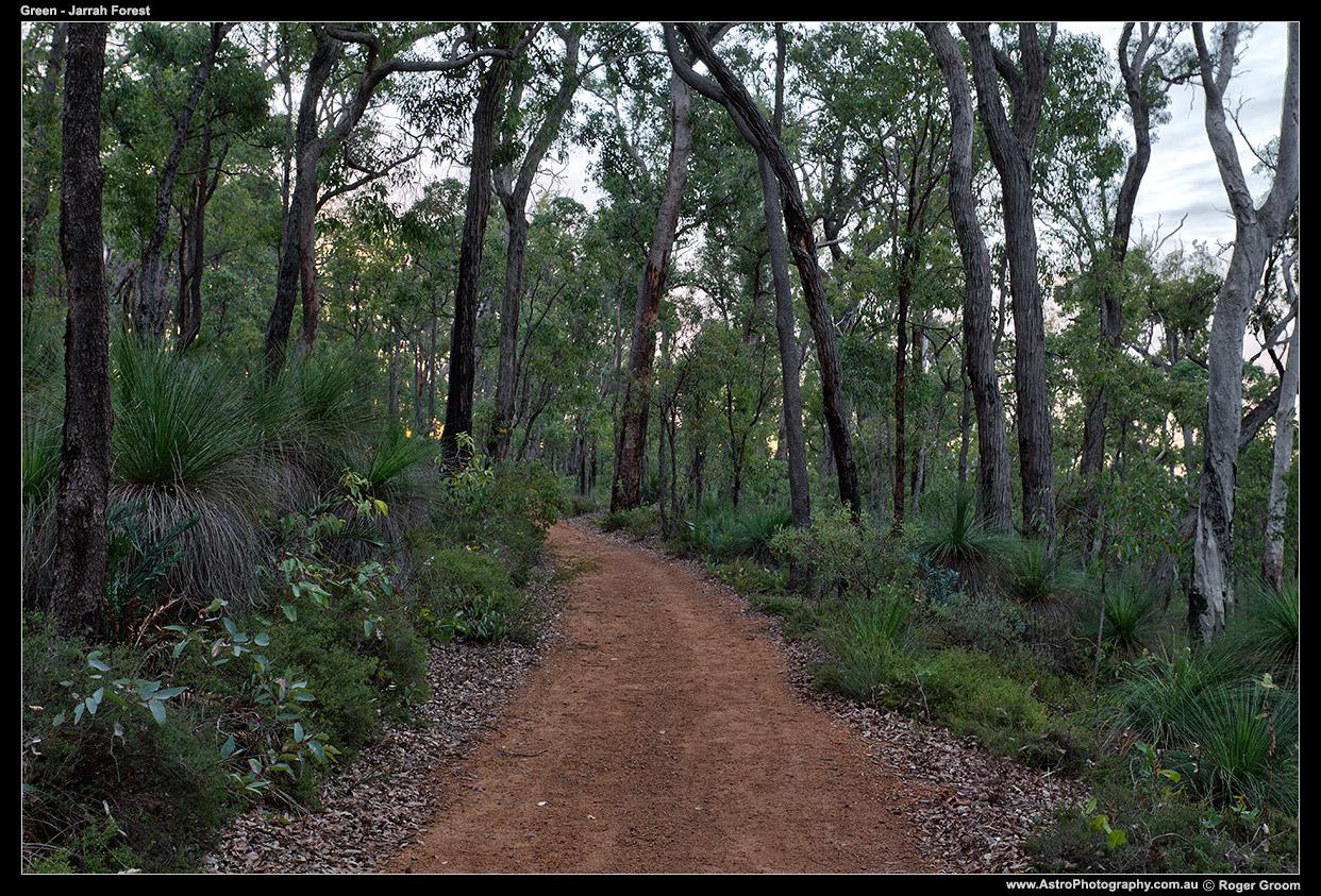 Green - Jarrah Forest