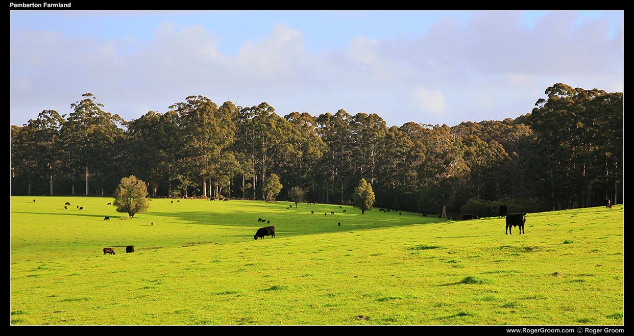 Pemberton Farmland - South-west Western Australia.
