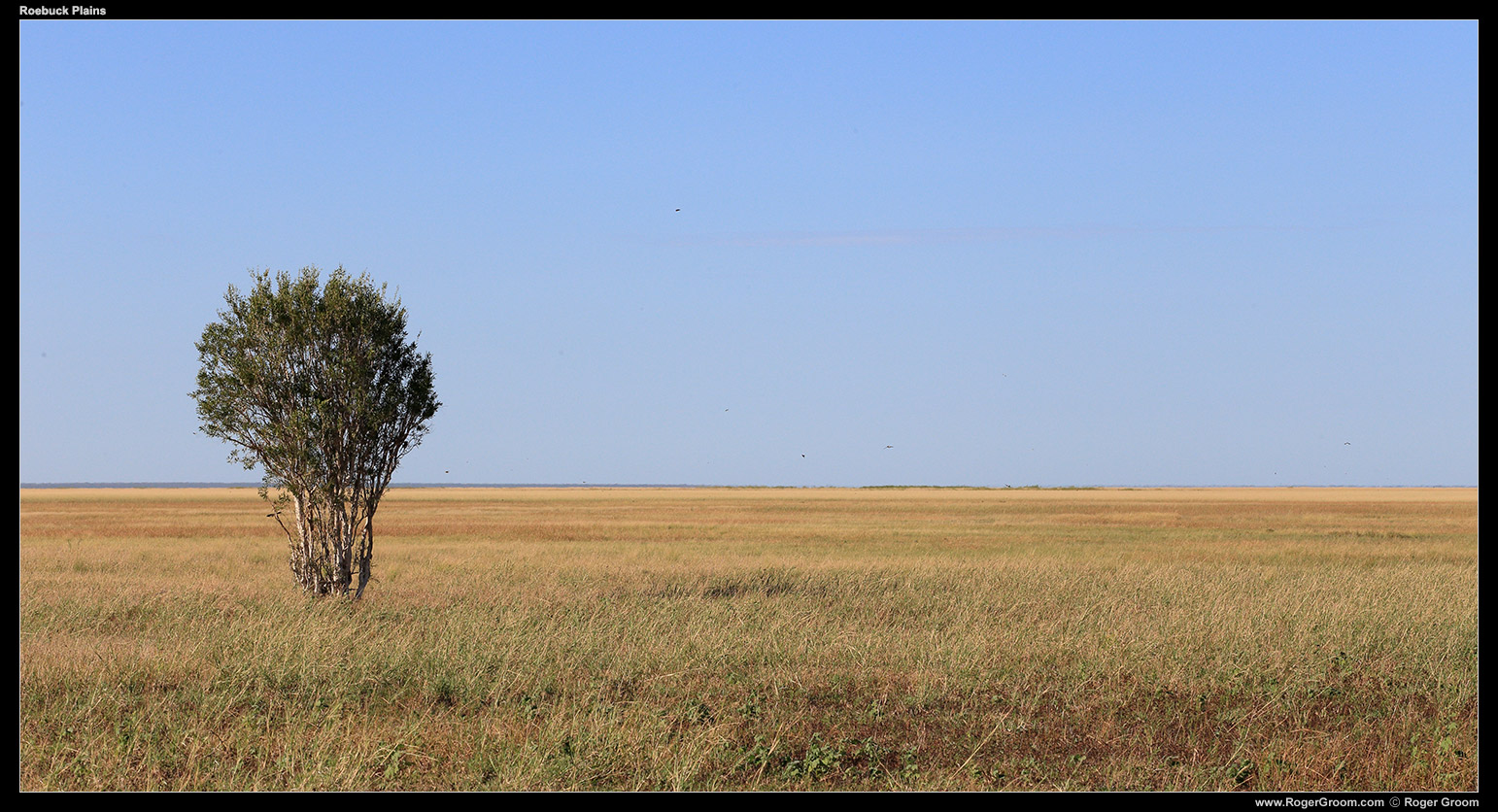 I didn't imagine Australia had such large open grasslands, not natural anyhow. This is Roebuck Plains, taken on a tour with Broome Bird Observatory. Endless plains of grass you literally cannot see the end of, yet teaming with birds.