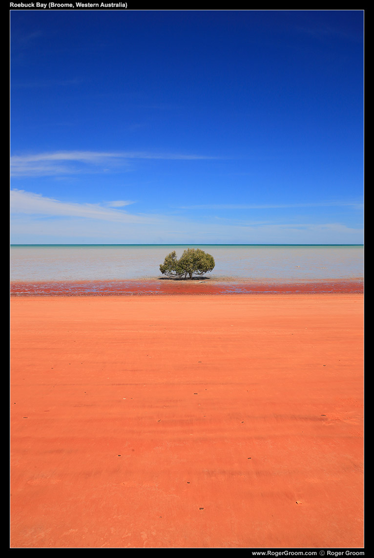 Roebuck Bay Mangrove Tree. The amazing colours and simple lines. Red dirt, blue sky.