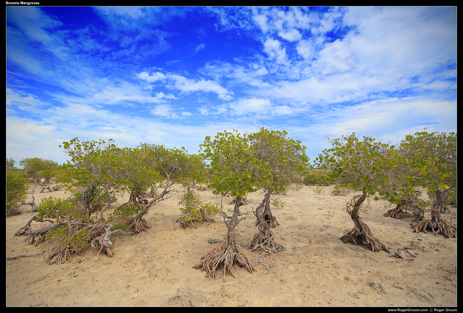 Mangroves at Barred Creek - Broome, Western Australia