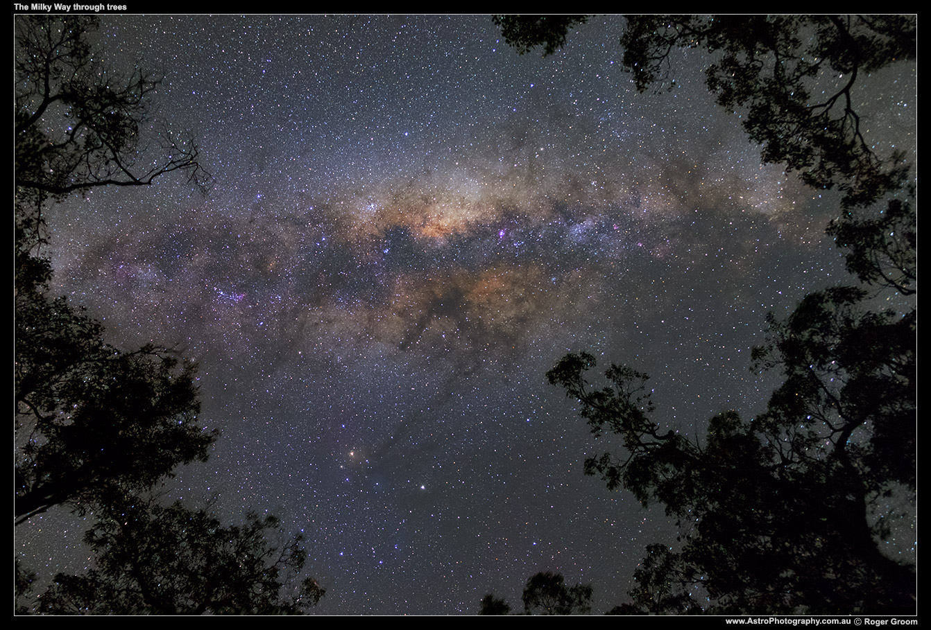Milky-Way-through-trees-(XF-18-55-F2)